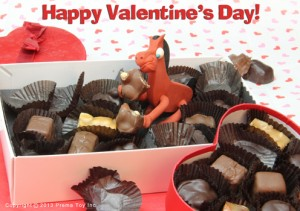 Pokey eating Valentine's Day chocolates